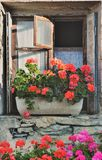 Geranium in flowerpot put on a window. Of old house royalty free stock images