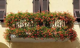 Geranium flowers adorn the balcony Royalty Free Stock Images