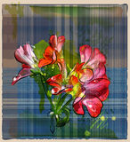 Geranium flowers on the checked background Royalty Free Stock Images