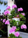 Geranium flowers in hanging basket on a balcony Stock Image