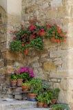 Geranium flowers in Italian street Stock Photography