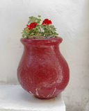 Geranium flowers in old red flowerpot Stock Images