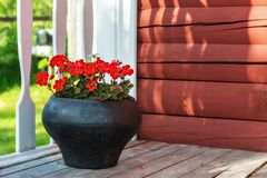 Geranium flowers in a pot. Red geranium flowers growing in an old cast-iron pot on the floor of the porch of a country house royalty free stock photo