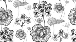 Free Geranium Flowers. Seamless Floral Pattern Royalty Free Stock Photos - 159815368