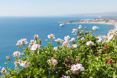 Geranium flowers with seascape at Sicily Royalty Free Stock Images