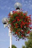 Geranium flowers on street light Royalty Free Stock Photography