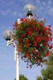 Geranium flowers on street light Royalty Free Stock Photography