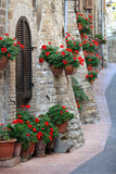 Geranium flowers in streets of Assisi, Umbria. Geranium flowers in the streets of Assisi village, Umbria, Italy stock photography