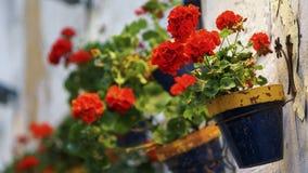Geranium Flowers on Wall Pottery Cadiz Spain Royalty Free Stock Image