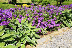 Geranium with hosta Royalty Free Stock Image
