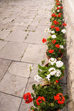 Geranium lineup. A flagstone patio with a number of geraniums in clay pots lining the side of the image Royalty Free Stock Images