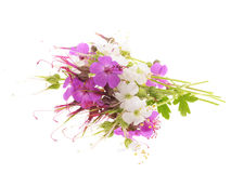 Geranium macrorrhizum blossoms Stock Photography
