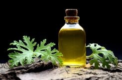 Geranium oil aromatherapy bio organic SPA stock photos