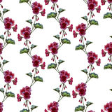 Geranium pattern Royalty Free Stock Images