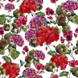 Geranium pattern Stock Photos