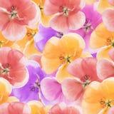 Geranium, pelargonium. Seamless pattern texture of flowers. Flor Stock Photography