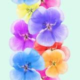 Geranium, pelargonium. Seamless pattern texture of flowers. Flor Stock Photo