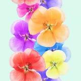 Geranium, pelargonium. Seamless pattern texture of flowers. Flor Royalty Free Stock Images