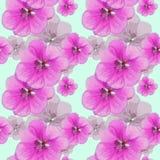 Geranium, pelargonium. Seamless pattern texture of flowers. Flor Royalty Free Stock Photos