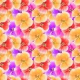 Geranium, pelargonium. Seamless pattern texture of flowers. Flor Royalty Free Stock Photography