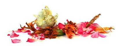 Geranium, petunia, dry delicate flowers, leaves and petals of pr Stock Photos