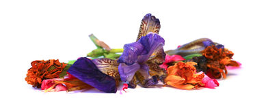 Geranium, petunia, dry delicate flowers, leaves and petals of pr Royalty Free Stock Photography