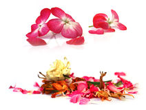Geranium, petunia, dry delicate flowers, leaves and petals of pr stock photos