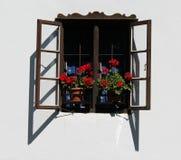 Geranium. A pink geranium on a window stock photos
