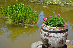 Geranium planter and pond Royalty Free Stock Images