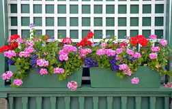 Geranium planters Royalty Free Stock Photos