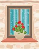 Geranium pot Royalty Free Stock Photo