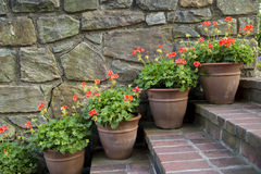 Geranium pots. Stone and brick work in a garden Royalty Free Stock Images