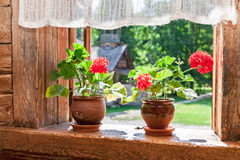Geranium rode bloemen op het venster van oud landelijk blokhuis Stock Fotografie