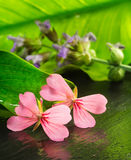 Geranium and sage flower over natural background Stock Photo