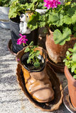 Geranium in a shoe pot. Geranium in shoe vase for home decoration stock images
