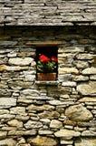 Geranium, stenen en vrede Stock Afbeeldingen
