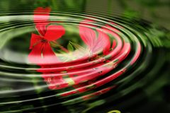 Geranium, Wave, Water, Rings Royalty Free Stock Photo