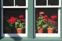 Geranium Window Stock Photos