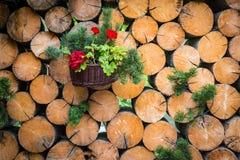 Geraniumbloem in mand op houten logboekenmuur stock foto