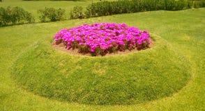 Geraniumbloemen Stock Afbeeldingen