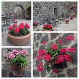 Geraniumflowers on street stock photography