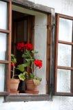 Geraniuminstallaties op vensterbank Royalty-vrije Stock Afbeelding