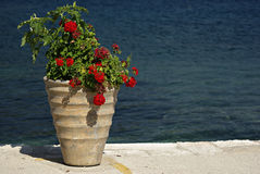 Geraniums. Big vase with red geraniums at pier at sunny summer day Stock Images
