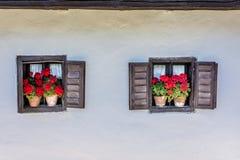 geraniums Imagens de Stock