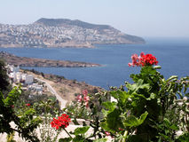 Geraniums, Bodrum - Turkey stock photography