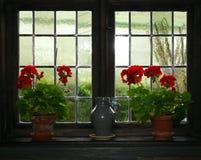 Geraniums en kruik Royalty-vrije Stock Afbeeldingen