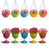 Geraniums in flower pots Stock Image