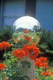 Geraniums and garden reflecting ball, PA Royalty Free Stock Photos