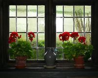 Geraniums and jug. Some Geraniums and a jug in front of a window royalty free stock images