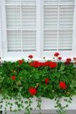Geraniums op venster Stock Afbeeldingen